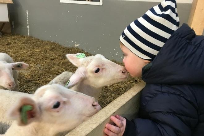ae0047676ac blog - 9x lammetjes, geitjes en koeien kijken door heel NL ...
